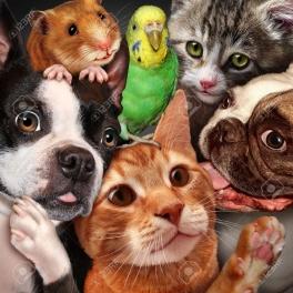 Evcil Hayvanlar'a Yolculuk Yolu Açıldı