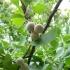 Ginkgo Biloba Bitkisinin Gizli Sırları Nelerdir ?