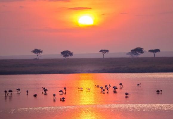 Manzara Fotoğrafları Kuşlar, Deniz ve Günbatımı