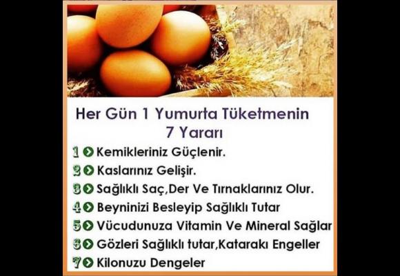 Günlük 1 Yumurta Tüketmenin Faydaları Nelerdir ?